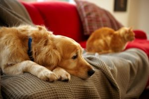 Pet Custody and Divorce